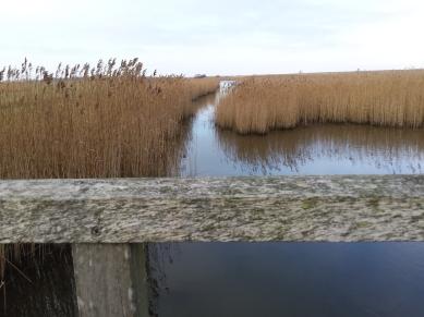 Natuurgebied Waalenburg